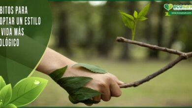 Photo of 8 formas sencillas de vivir un estilo de vida más ecológico