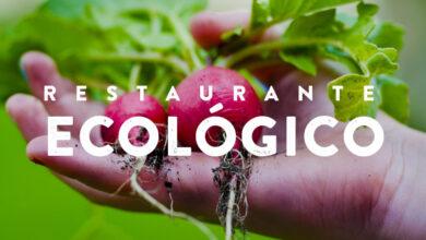 Photo of Consejos para ser ecológico en la cocina