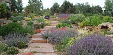 Photo of Conservar el agua en el césped y el jardín con Xeriscaping