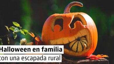 Photo of Decidir el destino de tus calabazas de Halloween – 3 recomendaciones