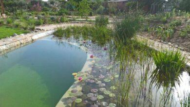 Photo of Sumérjase en una piscina ecológica (Parte 1)