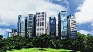 Photo of Verde en la ciudad: 5 consejos para la jardinería urbana